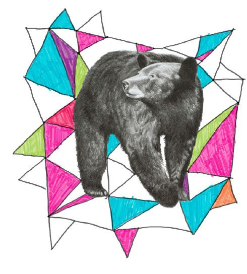 Brand illustration of grisly bear against abstract shape background.