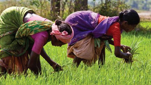 Annual report design - two ladies in a rice paddy field picking crop in bright coloured saris